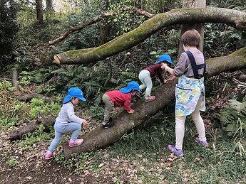森の木で遊ぶ.jpg