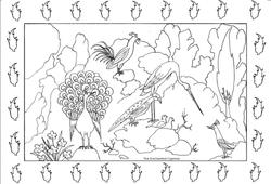 birds a colorier