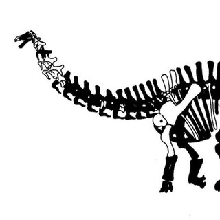 Seuuwassea Skeleton