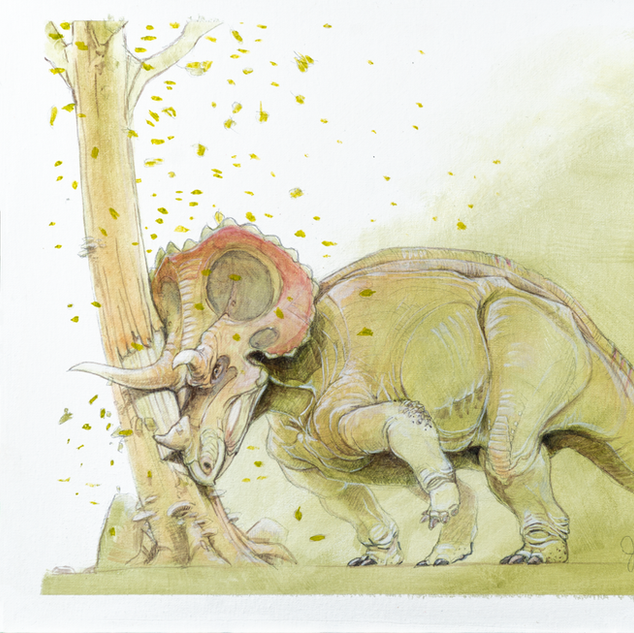 Triceratops in Rut