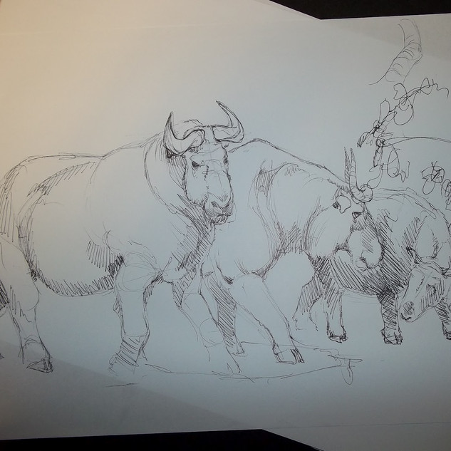 Takin Sketch