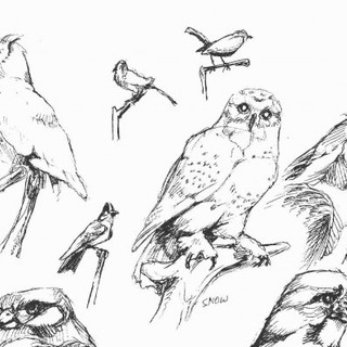 Bird Hall Sketches