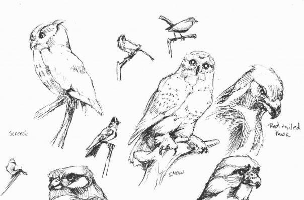 Bird Hall Sketches