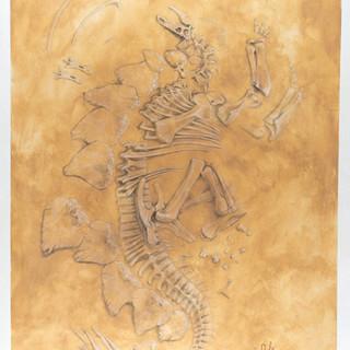Stegosaurus Bone Bed