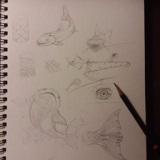 Fish Sketch