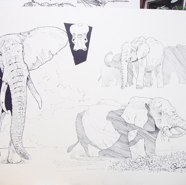 Elephant Ballpoint Sketch