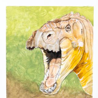 Iguanodon Head Study