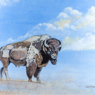 Byron the Bison