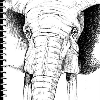 Elephant Face Sketch