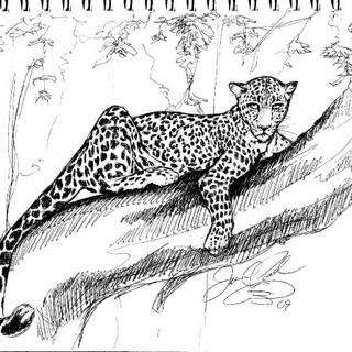 Jaguar Sketch