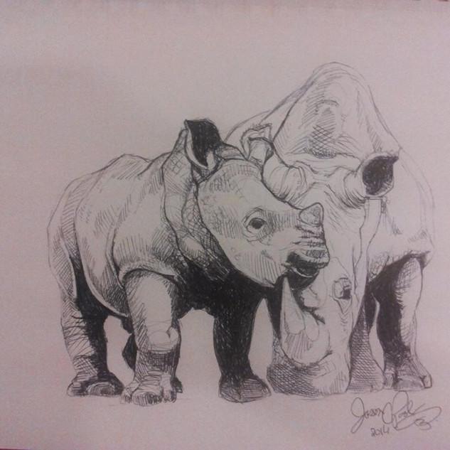 Rhinos Sketch