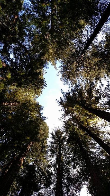 redwood clearing_edited.jpg