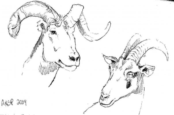 Horns Museum Sketch