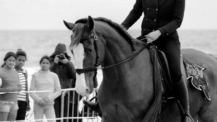 """""""Je ne contrôle pas mon cheval sans mors"""""""