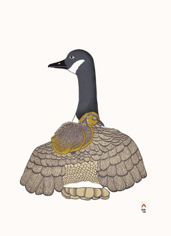 Nirliit (Canada Geese)