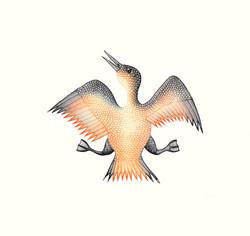 Jubilant Bird