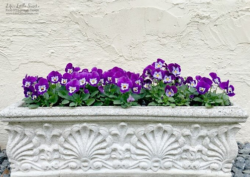 Virtual 1/2 Flat of Pansies - 9 Plants