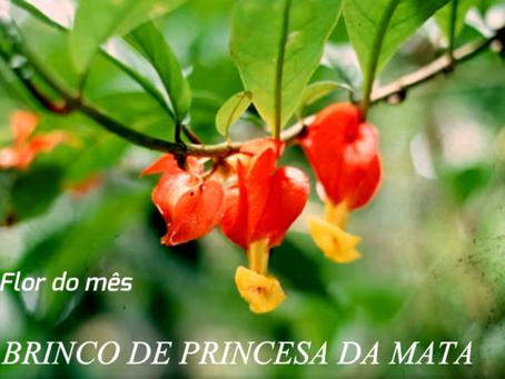 Flor do mês de março