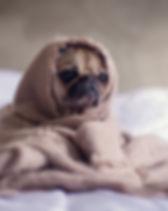 adorable-animal-bed-374898.jpg