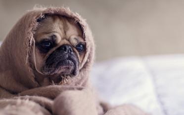 adorable-animal-bed-374898_edited.jpg