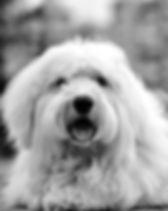 adorable-animal-black-and-white-156961.j