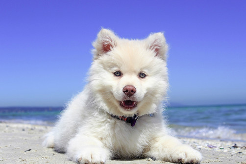 adorable-animal-beach-235805.jpg