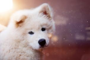 adorable-animal-animal-photography-59468