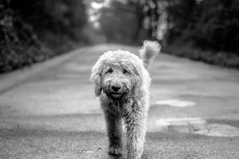 animal-black-and-white-canine-210180.jpg