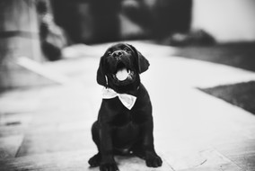 adorable-animal-baby-942260.jpg