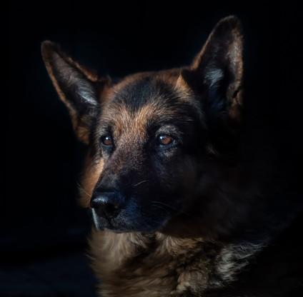 animal-canine-cute-236622.jpg