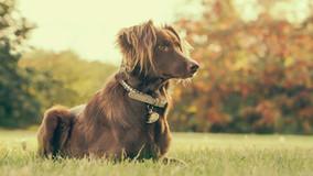 adorable-animal-blur-374865.jpg