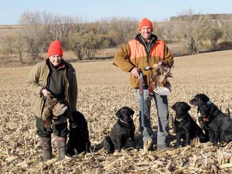 Wild Pheasant Hunt