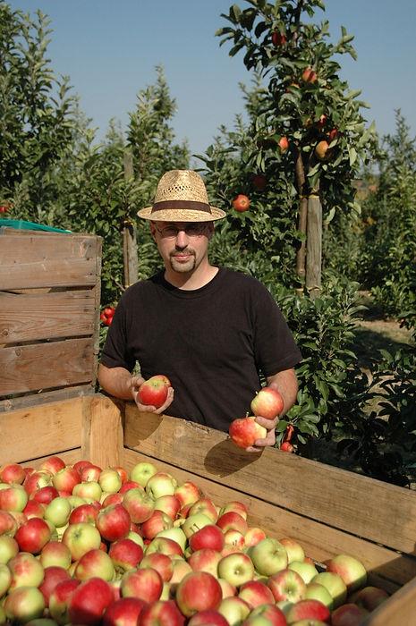 Carsten Sustrate bei der Ernte in der Plantage, Großkiste, Äpfel pflücken, Chef