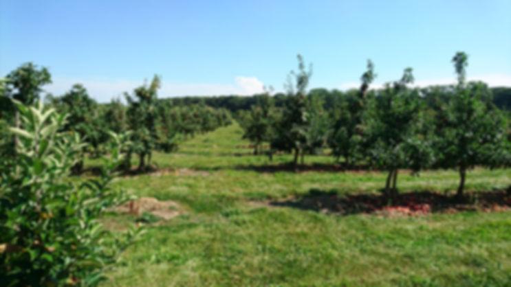 Apfelgarten, Plantage, Apfelplantage, Baumreihen, Baumanlage,