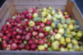 Kundenobst Äpfel und Quitten gemischt, Äpfel, Quitten, Lohnmosten, Obstkiste, Mosten, Most anliefern, eigener Saft,