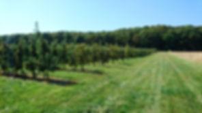 Limberg Plantage, Apfelbäume, Plantage,