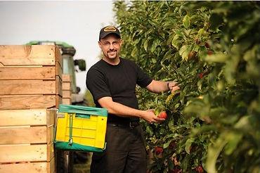 Carsten Sustrate beim pflücken von Äpfeln in der Plantage