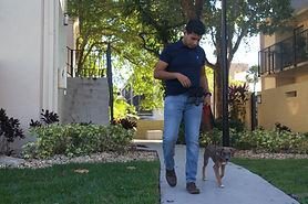 puppy training miami