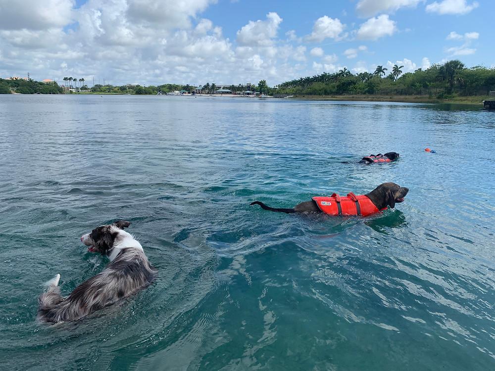 Dog Training Miami, FL