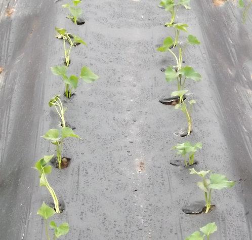 Biodegradable mulch