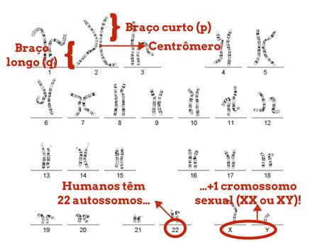 Você Sabe Ler Um Gene?