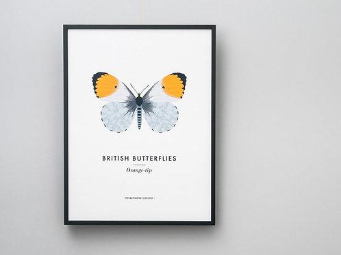 Orange-Tip Butterfly Giclee Print