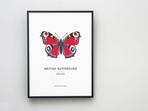 Peacock Butterfly Giclee Print