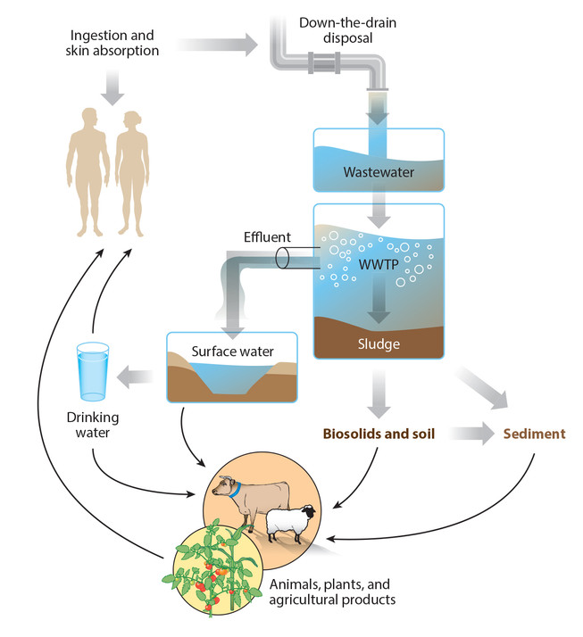 Triclosan: A Widespread Environmental Toxicant with Many Biological Effects
