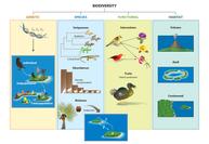 Island Biodiversity in the Anthropocene