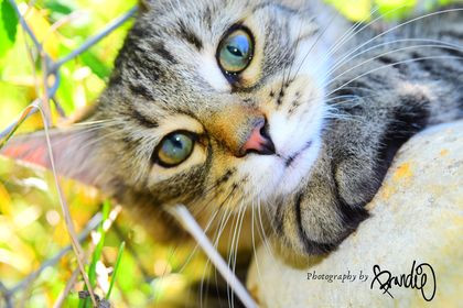 Kitten Photography by Brandie