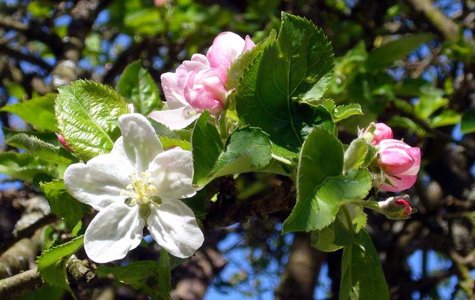 gite-charme-normandie-france-fleurs-pomm