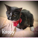 rooby.jpg