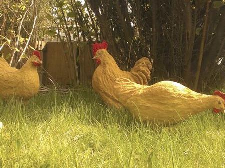 Høns, haner og kyllinger
