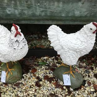 Høne på fod. frit valg 699.- Havekunst